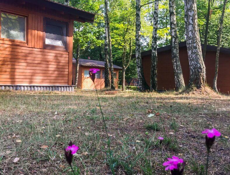 domki w lesie agroturystyka
